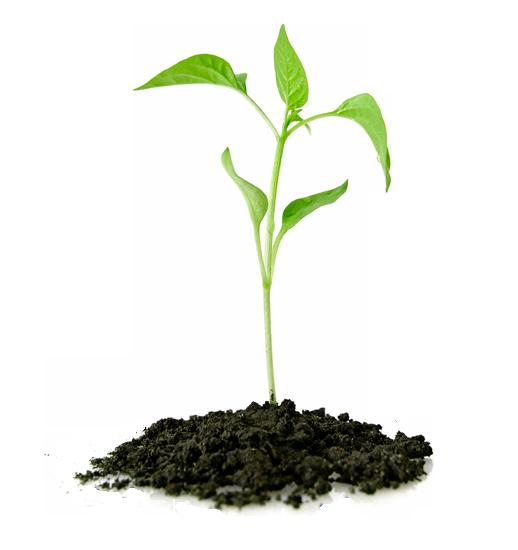 eudoracere-chi-siamo-growth_1